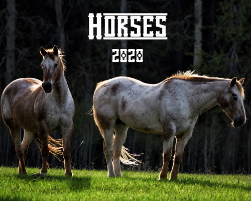 Horse 2020 calendar -Appaloosa ranch horses stand in early evening light