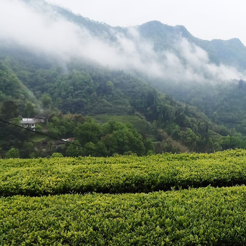 Deeper Look into China's Teas Sampler