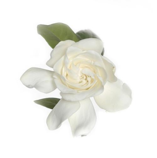 Gardenia and Tuberose Fragrance Oil