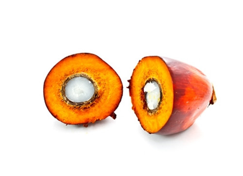Palm Oil - Organic Sustainable