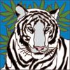 6x6 Tile White Tiger