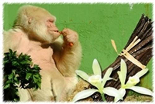 Nilla Gorilla