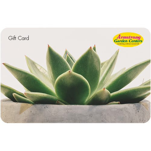 Digital Potted Succulent eGift Card
