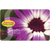 Senetti Gift Card by Mail