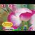 Digital Pink Flower eGift Card