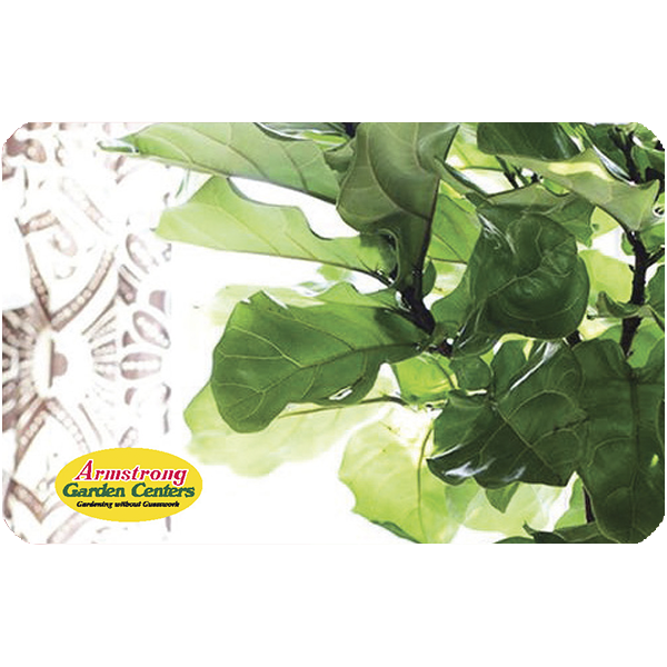 Fiddle Leaf Fig Gift Card by Mail
