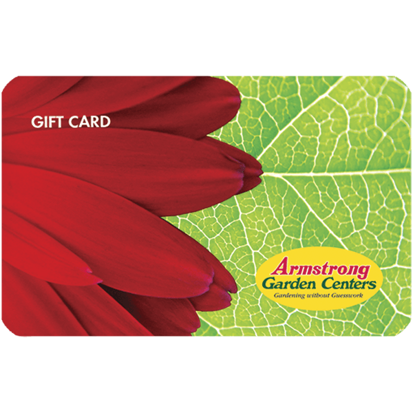 Red Flower Gift Card by Mail