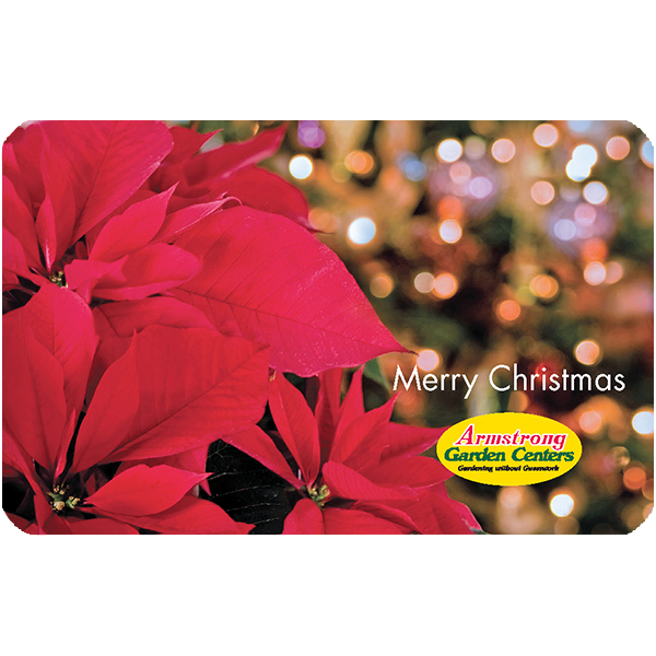 Christmas Twinkling Poinsettia Gift Card by Mail