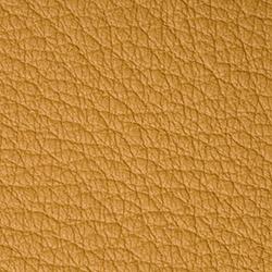 Bison | Mustard