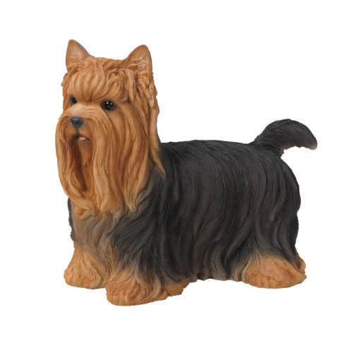 Real Life Female Yorkshire Terrier, Size B