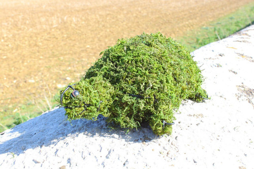 Tortoise / Turtle Small Topiary Moss Frame