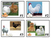 Chicken Matching Cards