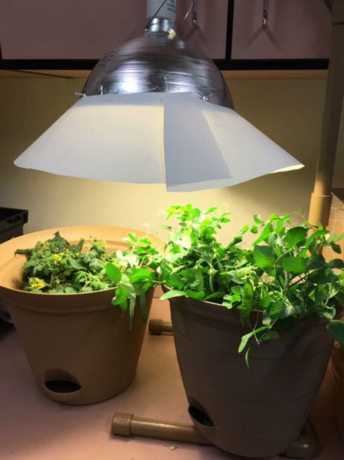 spacelite with plants