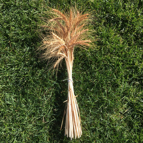 Wheat Bundle