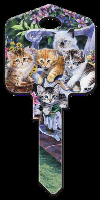 AC1- Kittens