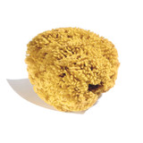 natural sponge for watercolour painting