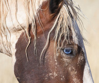 Wild for Horses