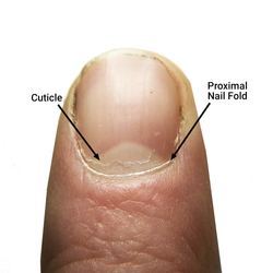 The Cuticle Should You Clip Push Or Scrape Bliss Kiss