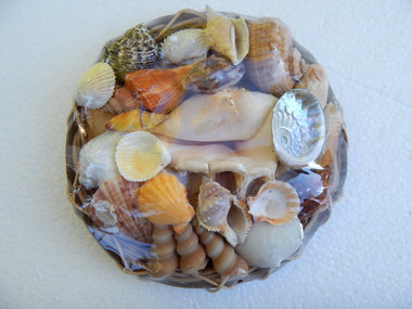 Sea Shell Collection in Basket