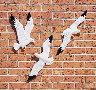 outdoor-seagulls-thm.jpg