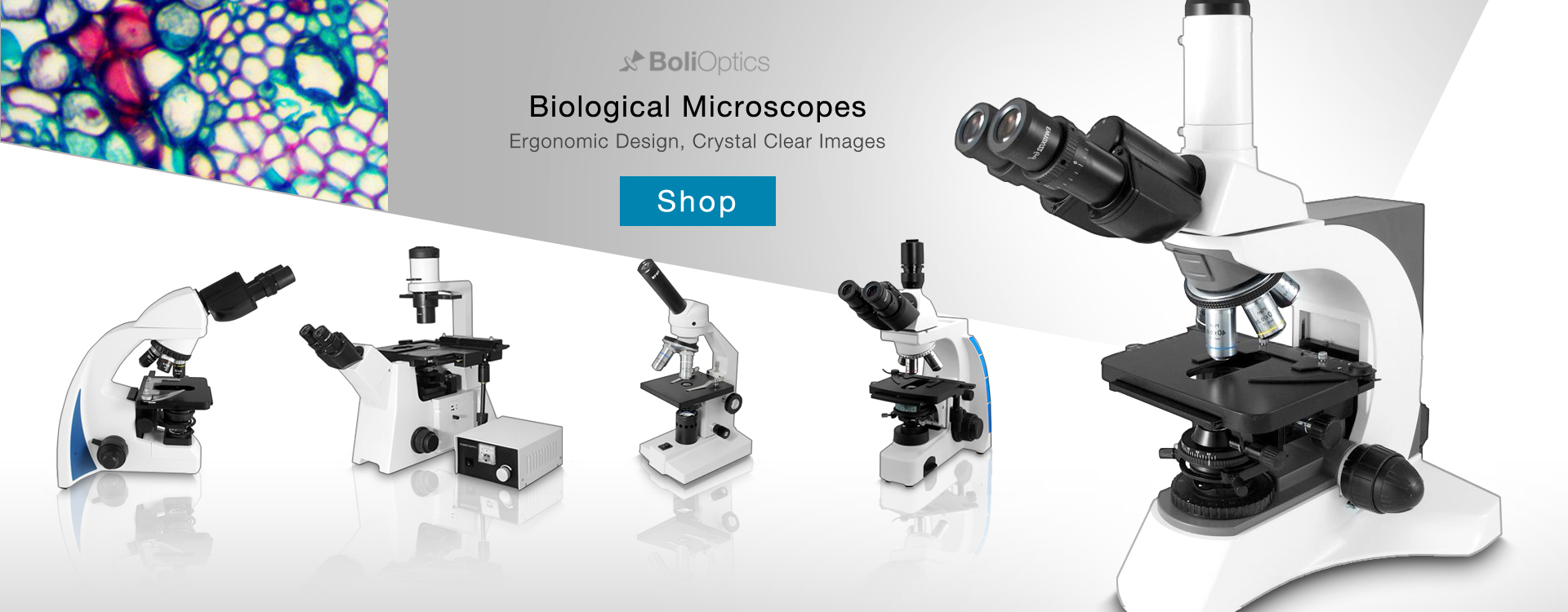 #1 Online Microscope and Accessory Store -