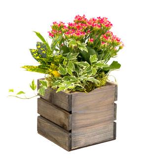 """WCB0005RC - Rustic Wood Wine Crate Box - 5"""" (12 pcs)"""