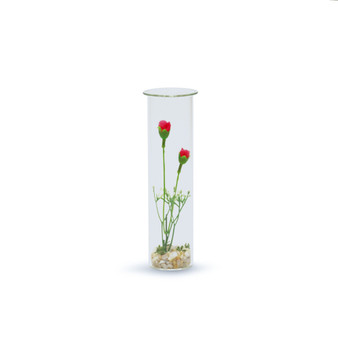 "HTB0208 - Wide Hanging Test Tube Vase - 2"" x 8"" (12 pcs/case)"