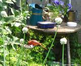 6 Garden Décor Ideas For Spring