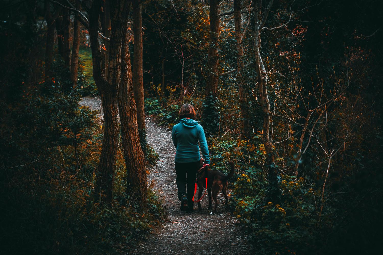 Tips para caminatas con mascotas