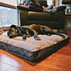 Ruffwear Restcycle Bed