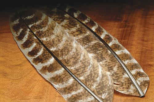 Hareline Natural Ozark Oak Mottled Turkey Quills