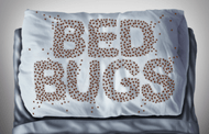 How to Win the War on Bedbugs on a Budget