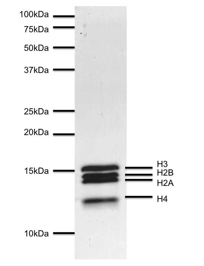 16-0012 Protein Gel