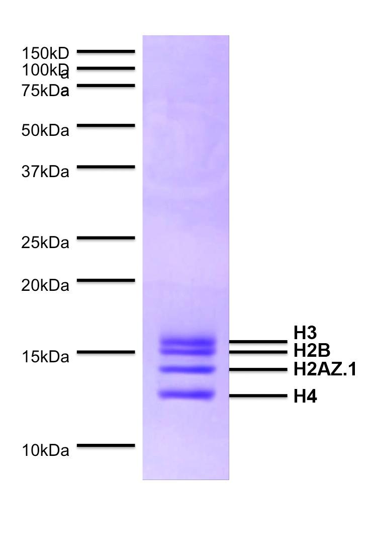 16-0014 Protein Gel