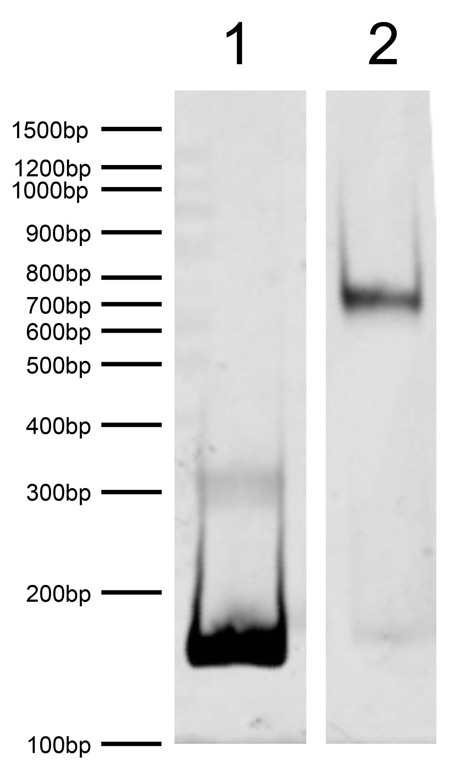 16-0024 DNA Gel