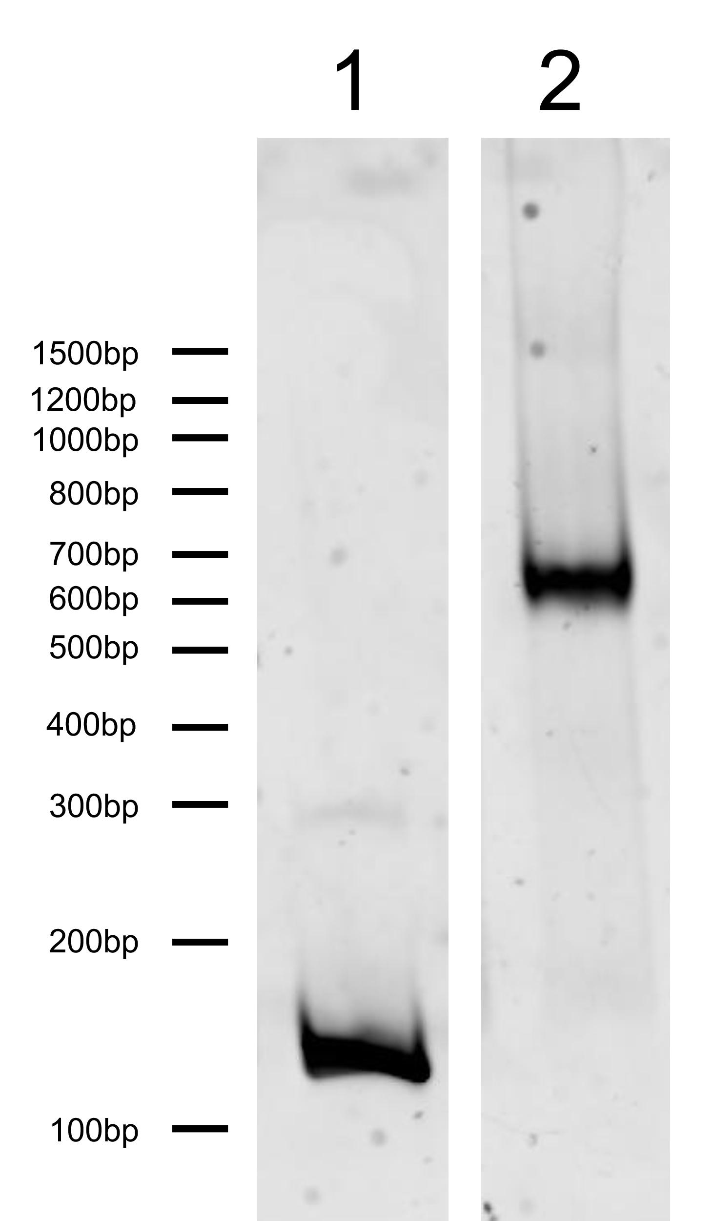 16-0346 DNA Gel
