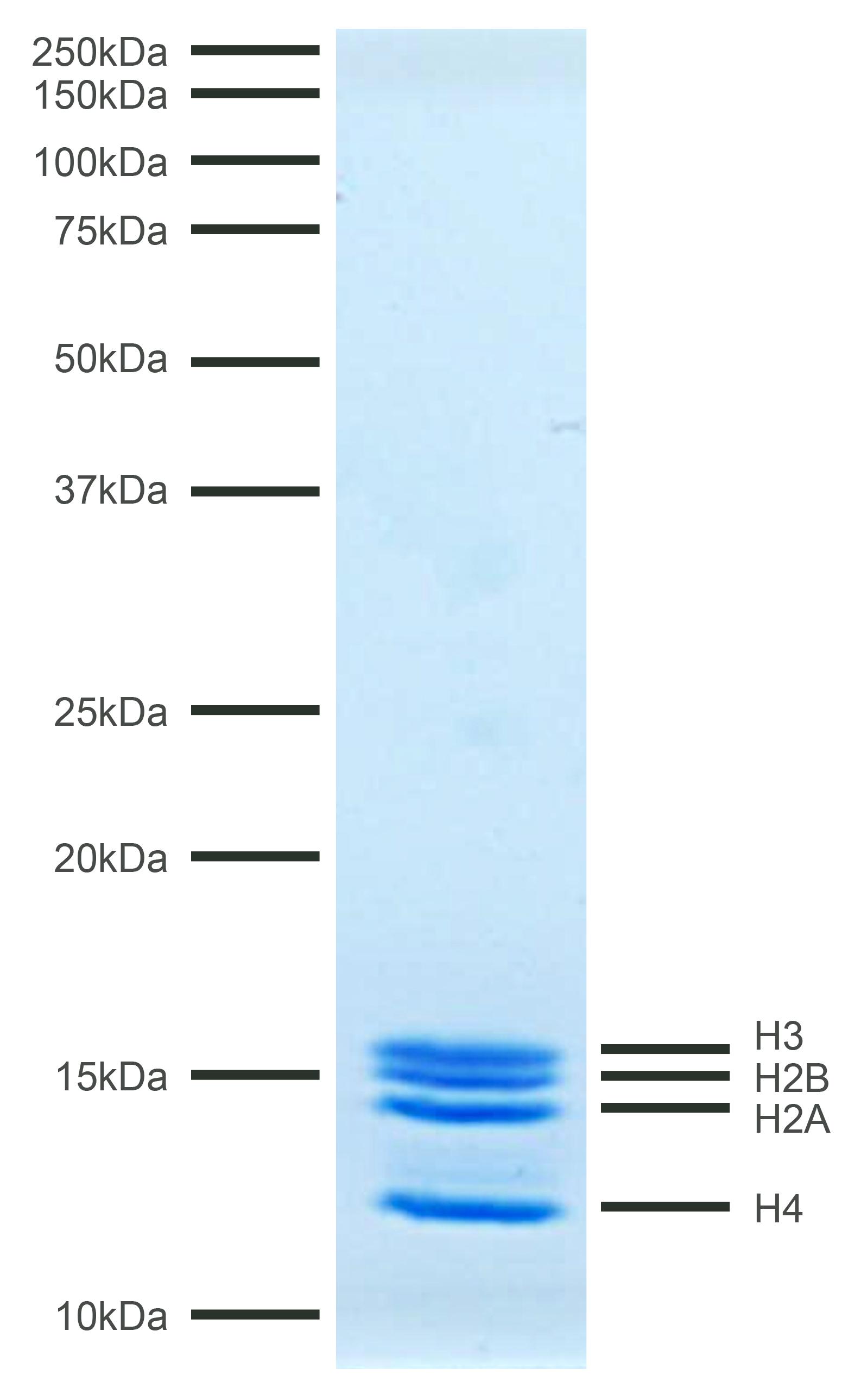 16-4112 Protein Gel