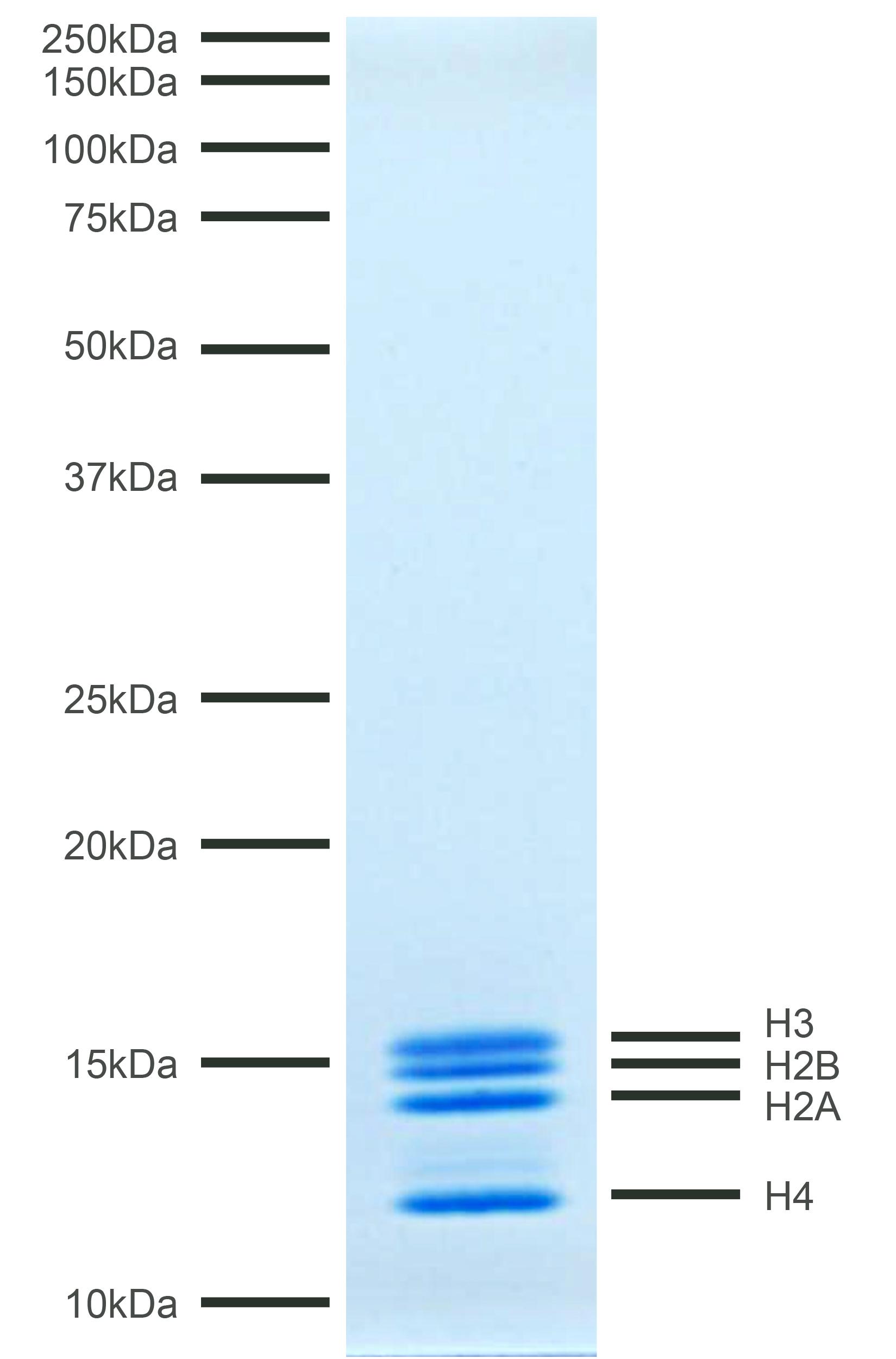 16-4113 Protein Gel