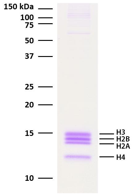 16-0002 Protein Gel