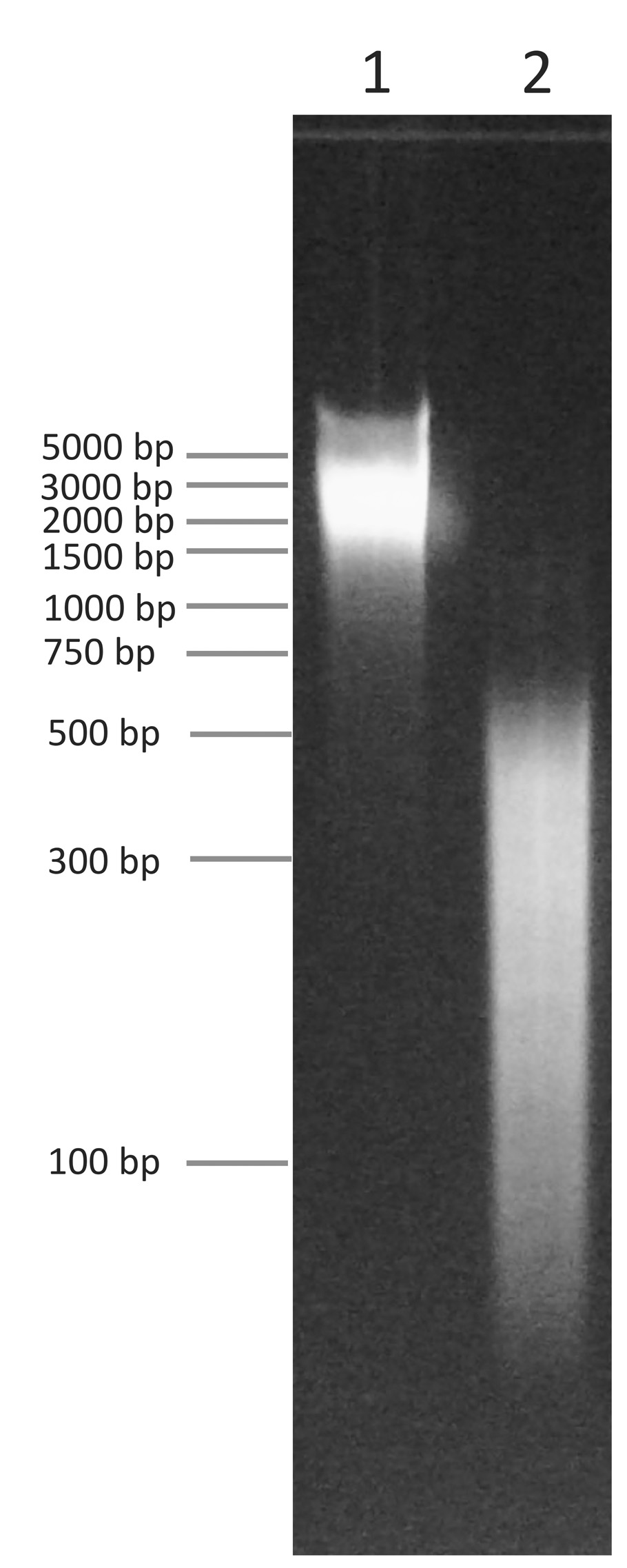 18-1401 Gel Data