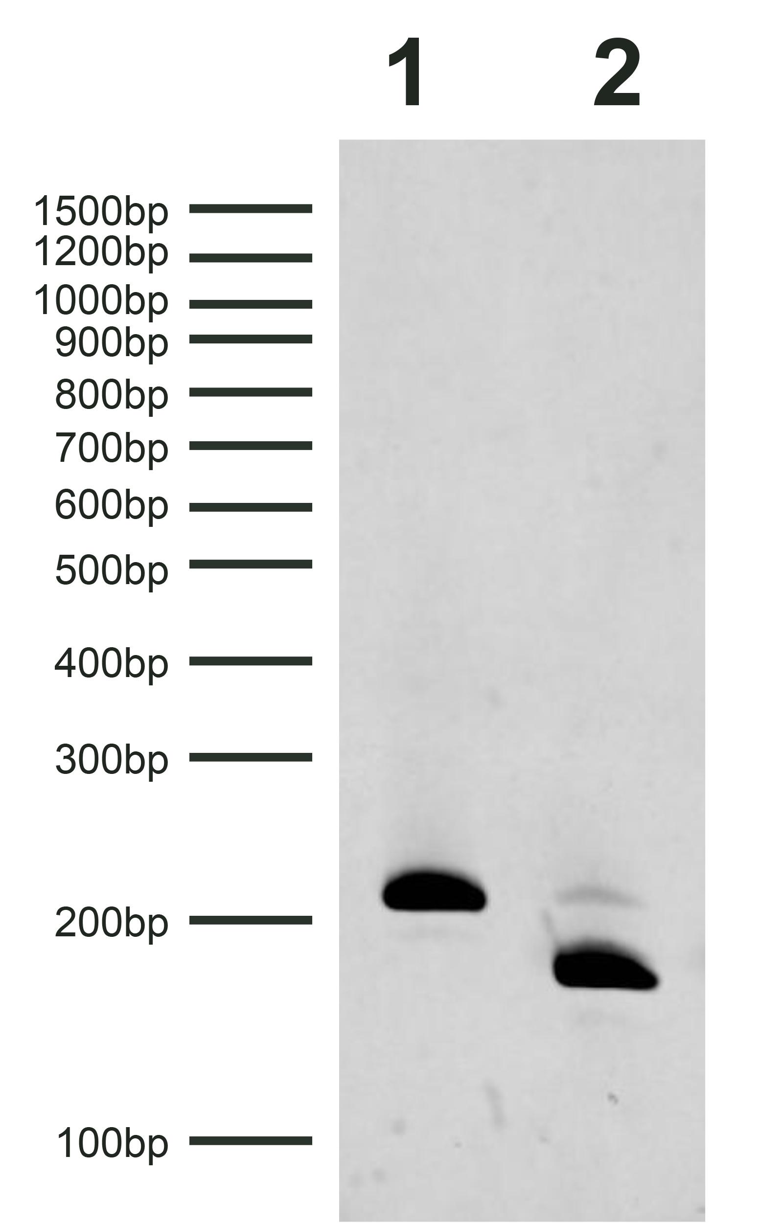 18-4112 Gel Data