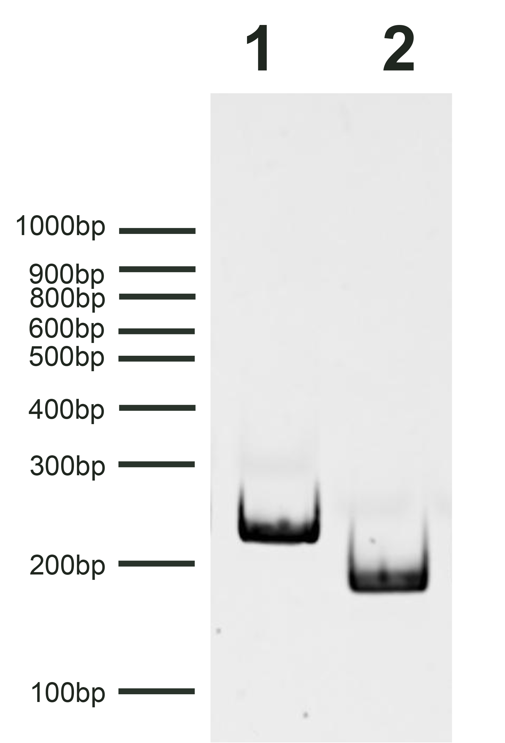 18-4113 Gel Data