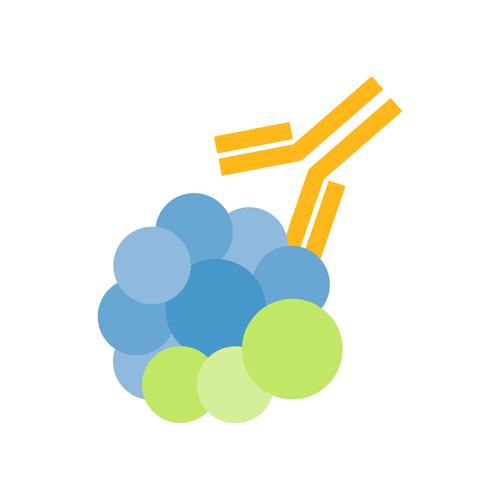 CARM1 / PRMT4 Antibody