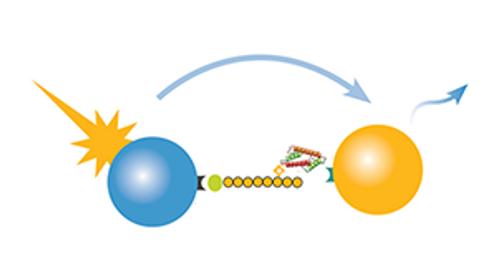 dCypher, novel chromatin binding interactions service