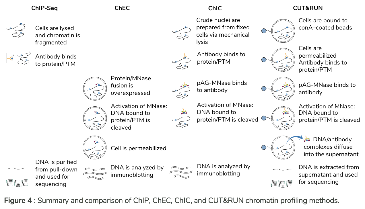 Comparison of ChIP-Seq, ChEC, ChIC, and CUT&RUN chromatin profiling methods