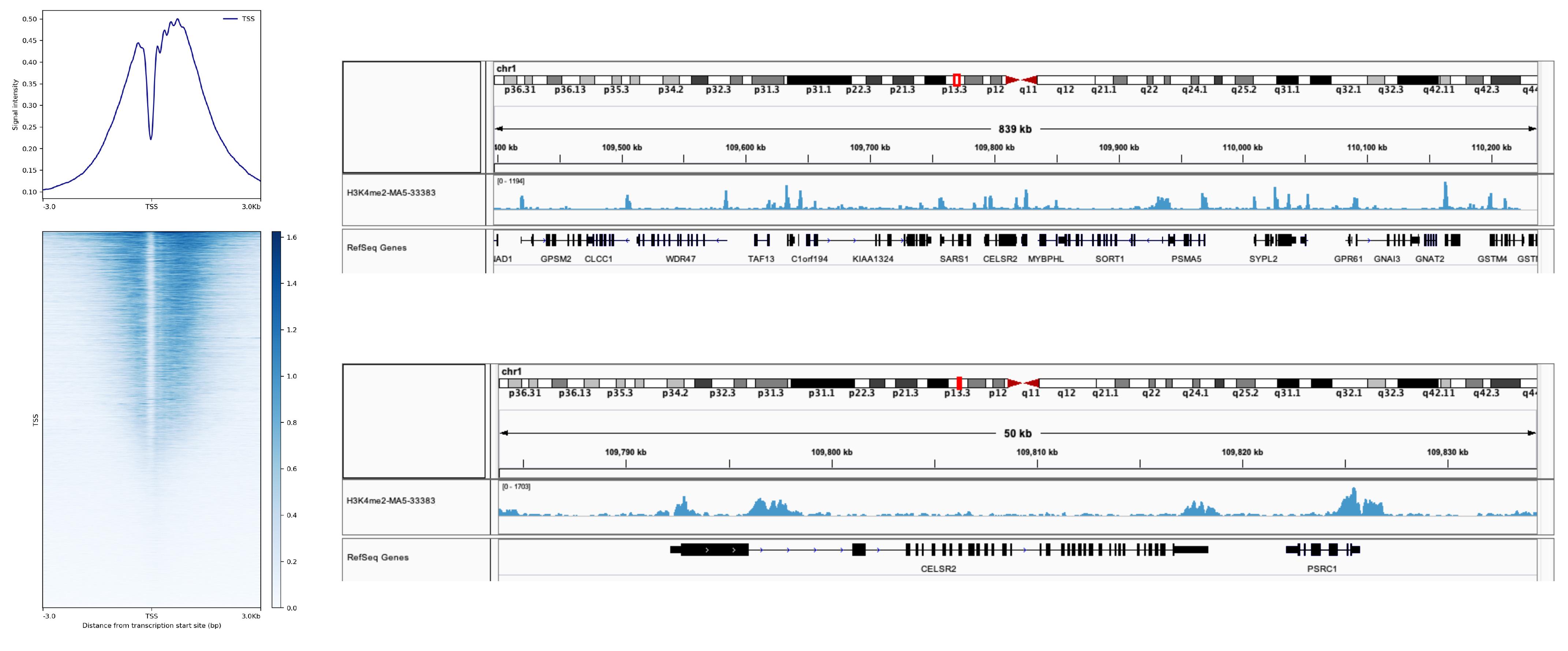 13-0027 SNAP-ChIP Data