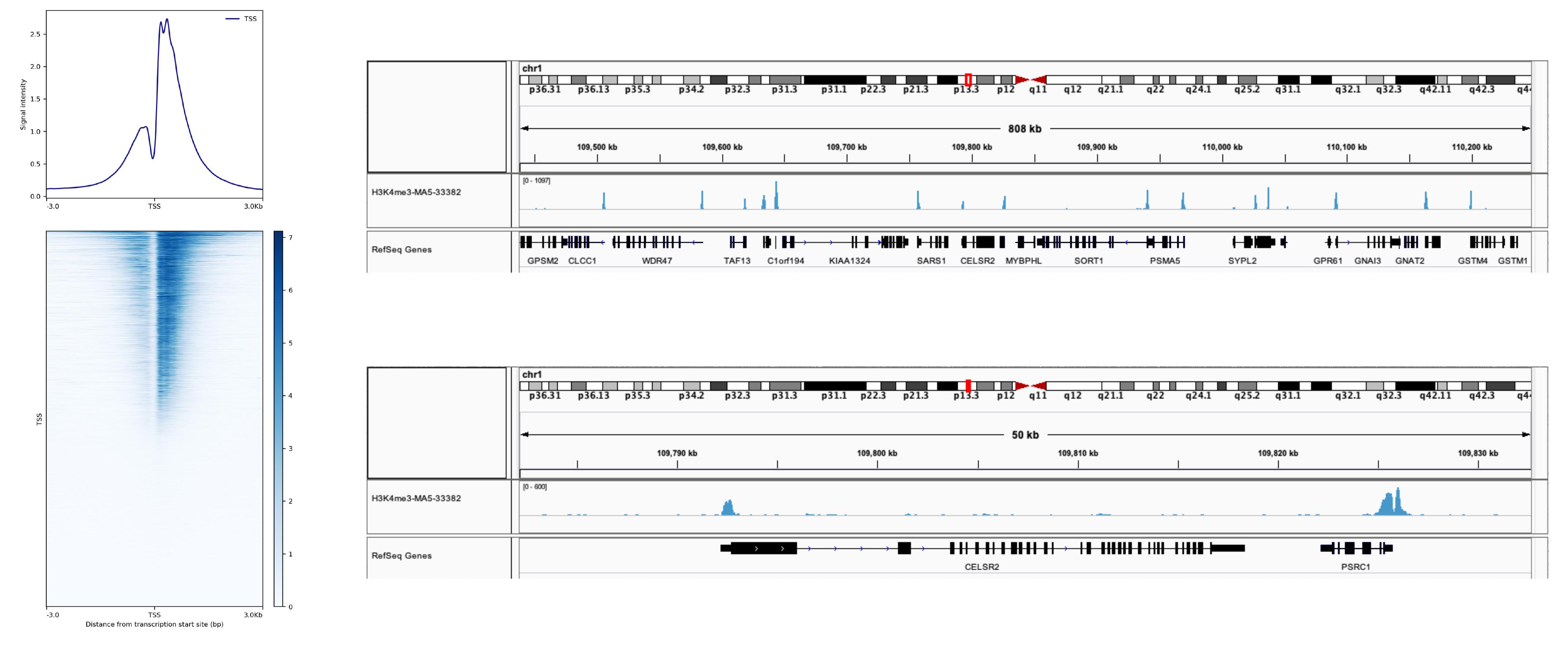 13-0028 SNAP-ChIP Data