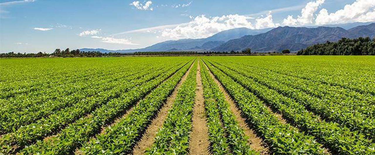 Quantum Agriculture Healing