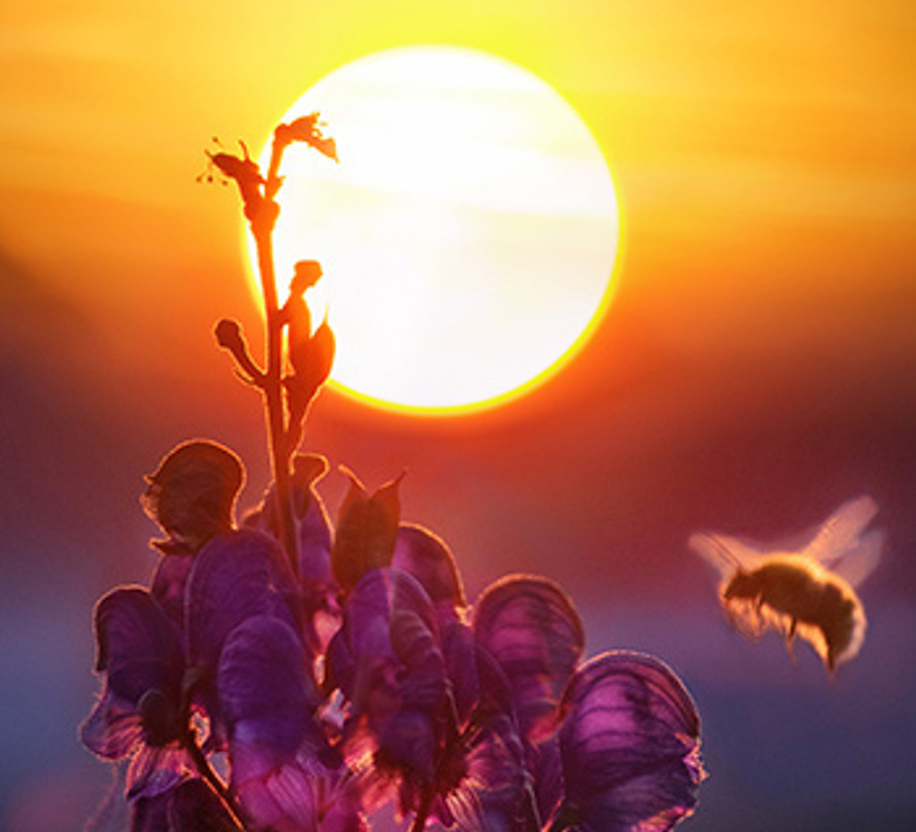 Bee Healthy in the Hot Summer