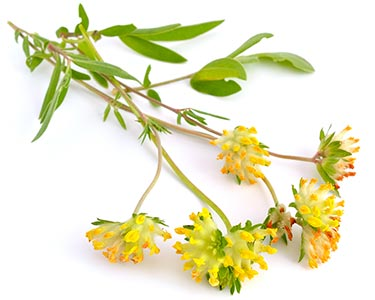 hawthorn-berry-herbal-supplement-ingredient-02.jpg